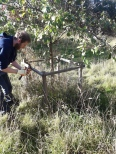 Ranger Calum removing the wire cages