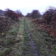 The freshly cut path - ready to be walked!